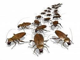 Ratten muizen kakkerlakken